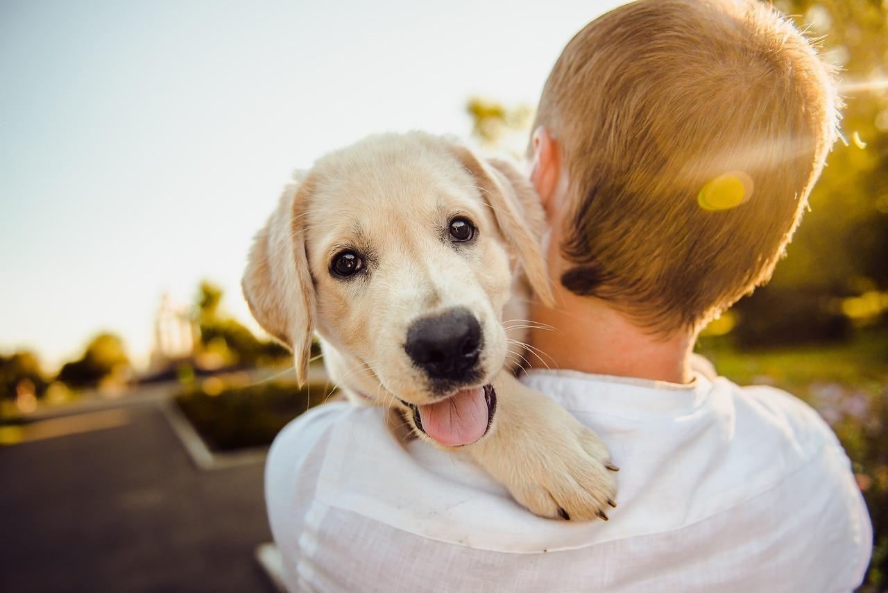 Картинки собак с хозяевами